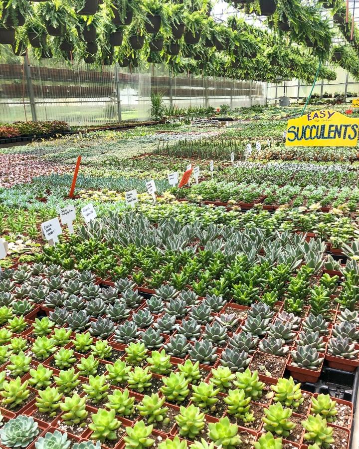 Sammis Greenhouse
